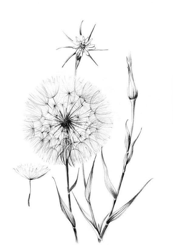 Dandelion Sketch wild flower clipart Hygge line drawing _ Etsy