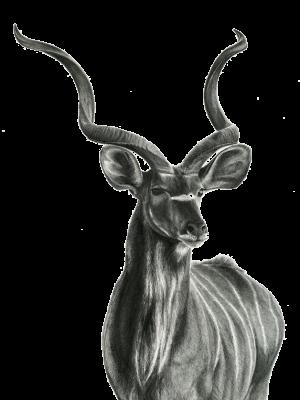 Kudu new